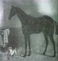 a black hunter standing in a stable, a terrier nearby by w.j. hepper