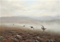 grouse flying low by ian macgillivray