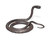 a snake by muneyoshi