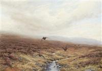 grouse in flight by ian macgillivray