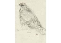 young hawk by atsushi uemura