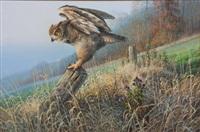 owl by don kloetzke