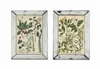 botanical (12 works) by johann wilhelm weinmann