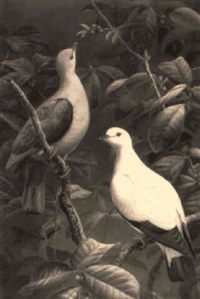 doves by david morrison reid henry