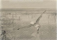 a gull swooping (+ 6 others, etchings; 7 works) by winifred marie louise austen