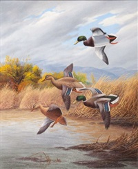 mallards by harry curieux adamson