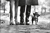 legs by elliott erwitt