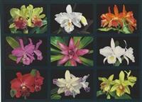 colors of nature v by eduardo bortk