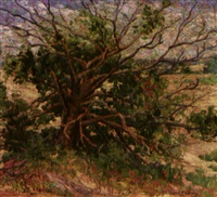 cedar tree in landscape by nina a. fleming