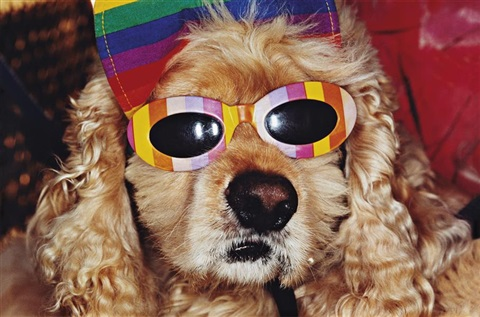 common sense dog with bow sunglasses by martin parr
