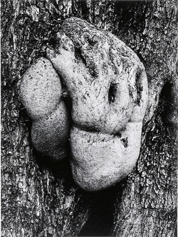 olive tree corfu 514 by aaron siskind