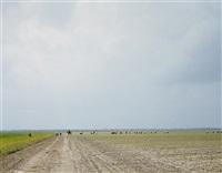the farm, angola state prison, angola, louisiana by alec soth