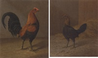 a prize winning red-brown cock by h. atkinson