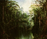amazon jungle landscape by luis monge