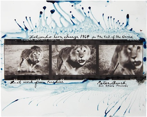 loliondo lion charge by peter beard