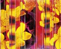 fiori by dany vescovi