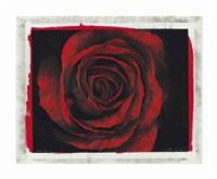 study of rose by robert longo