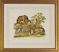 descrizioni degli animali (8 works) by innocente alessandri