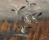 snow geese landing by harry curieux adamson