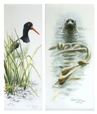 oyster catcher & bull seal and kelp (pair) by robert bateman