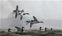 ducks through the mist by don kloetzke