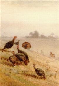 wild turkeys by charles whymper