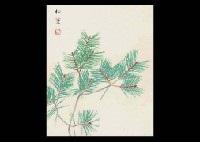 young pine by shoko uemura