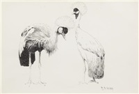 a pair of grey crowned cranes by william robinson leigh