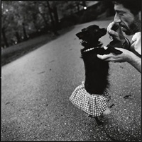 paws walk by mary ellen mark
