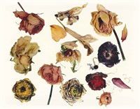 rose, ranunculus, dutch iris, new york, 2006 by irving penn