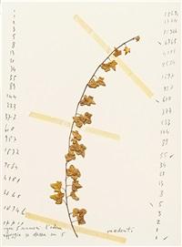 da un erbario raccolto nel 1979 in woga-woga, australia (portfolio of 14, incl. 1 in b&w) by mario merz