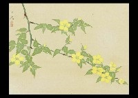 japanese rose by kyujin yamamoto