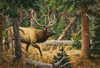 elk in a wooded landscape by ralph oberg