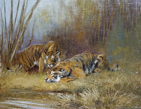 tigers by a watering hole by cuthbert edmund swan
