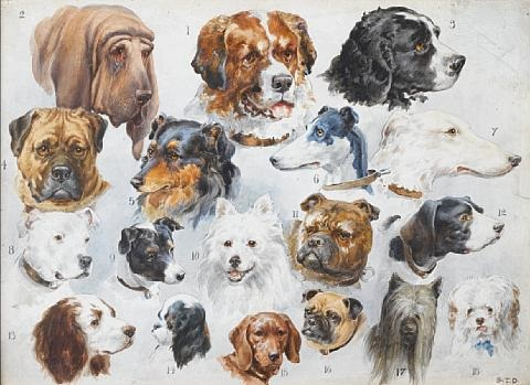 eighteen dogs by stephen t dadd