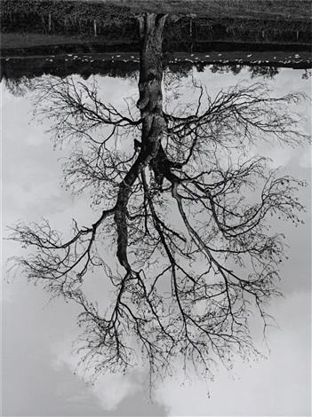 welsh oak 4 by rodney graham