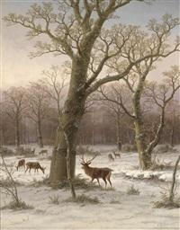 rotwild im winterwald by caesar bimmermann