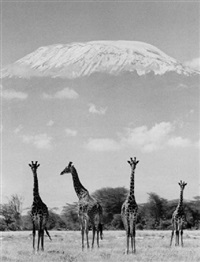 giraffes, africa (mit kilimanjaro) by ylla