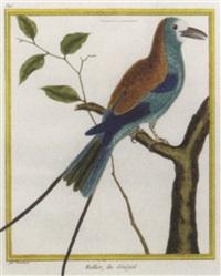 histoire naturelle des oiseaux by georges louis leclerc buffon