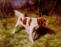 setter in a landscape by franklin whiting rogers