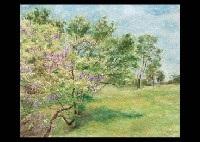 wisteria in nara park by shintaro yamashita