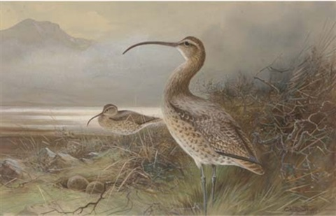 long billed curlews by a lake by charles whymper