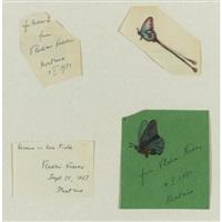butterflies by vladimir nabokov