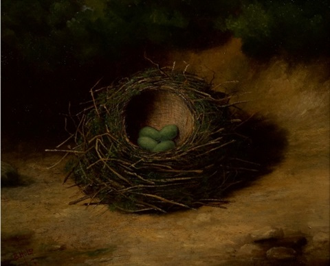 bird eggs in nests (2) by ben hold
