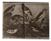 livre d'ornithologie ouvert by eugène atget
