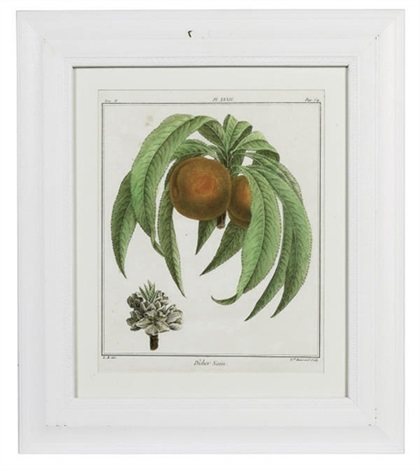 fruit species 11 others 12 works by henri louis duhamel du monceau