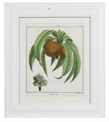 fruit species 11 others 12 works by henri louis duhamel du monceau