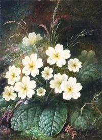 primroses by albert durer lucas