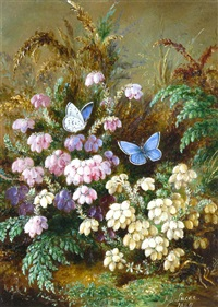 cross leaved heath(er) white and red, lady fern, pair of azure blue butterflies by albert durer lucas