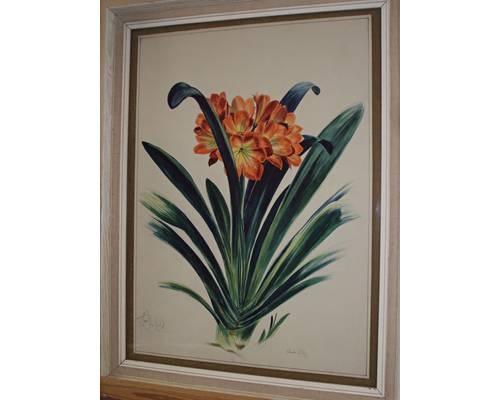 clivea lily by stuart m armfield